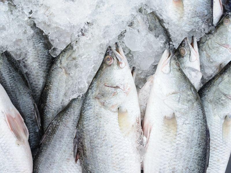 Balık Buzlukta Nasıl Saklanır? Balık Saklarken Nelere Dikkat Edilmeli?