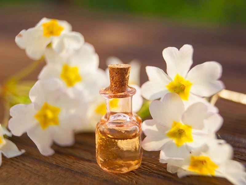 Çuha Çiçeği Faydaları Nelerdir, Nasıl Kullanılır?